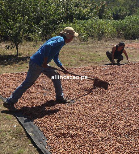 allincacao-nosotros-cacao-chocolate-peru-02